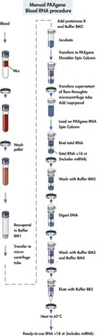 Manual PAXgene Blood RNA procedure.